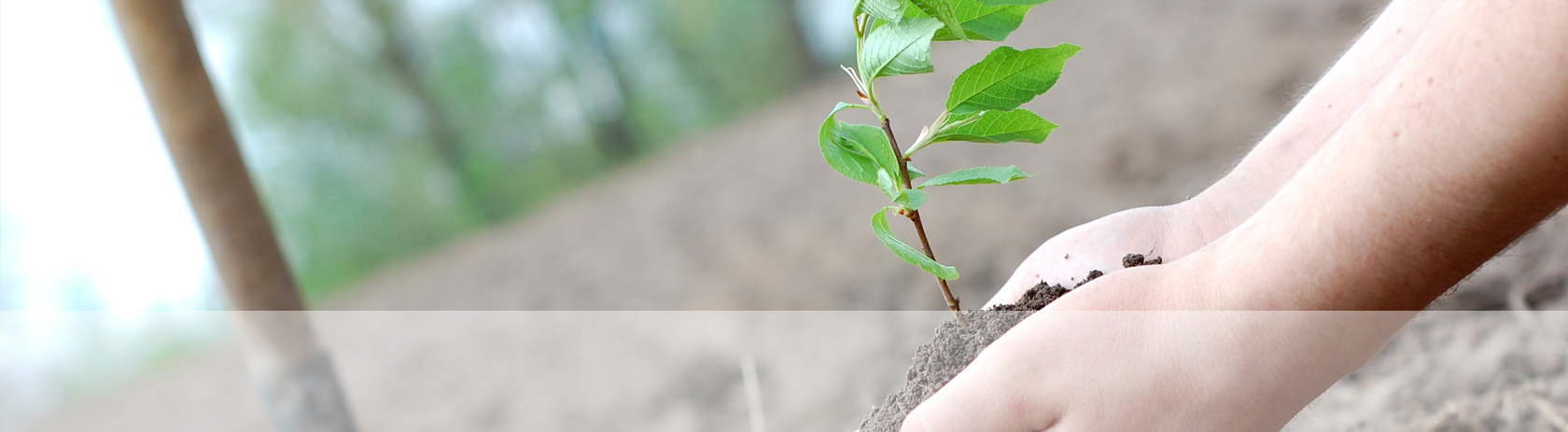 SLIDERS-HOME-plant a tree
